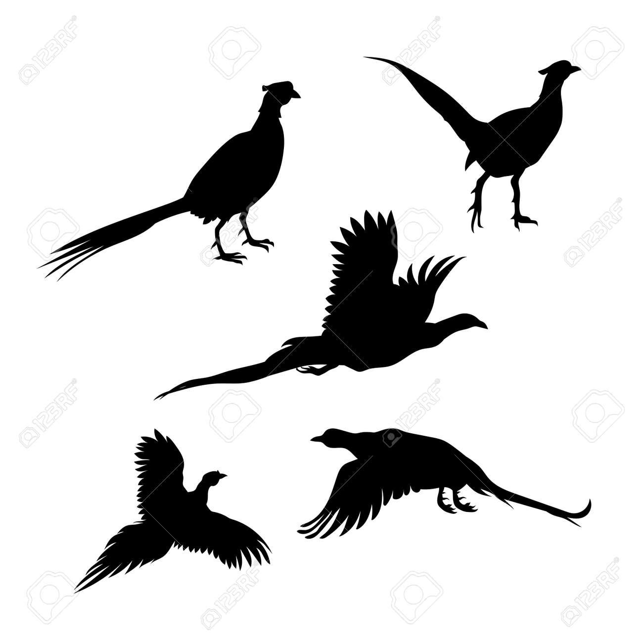 鳥のキジのベクトルのアイコンとシルエットさまざまなポーズのイラスト