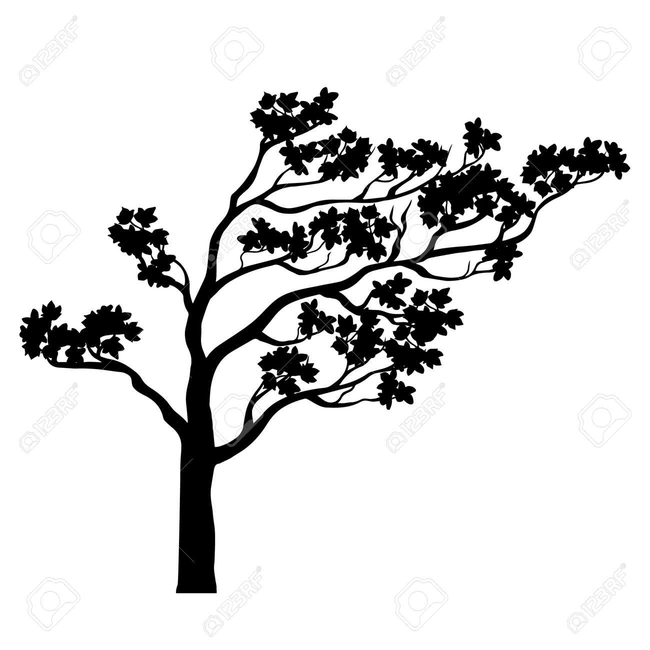 Silueta Del árbol De Sakura Esquema Aislado En Blanco Y Negro Un