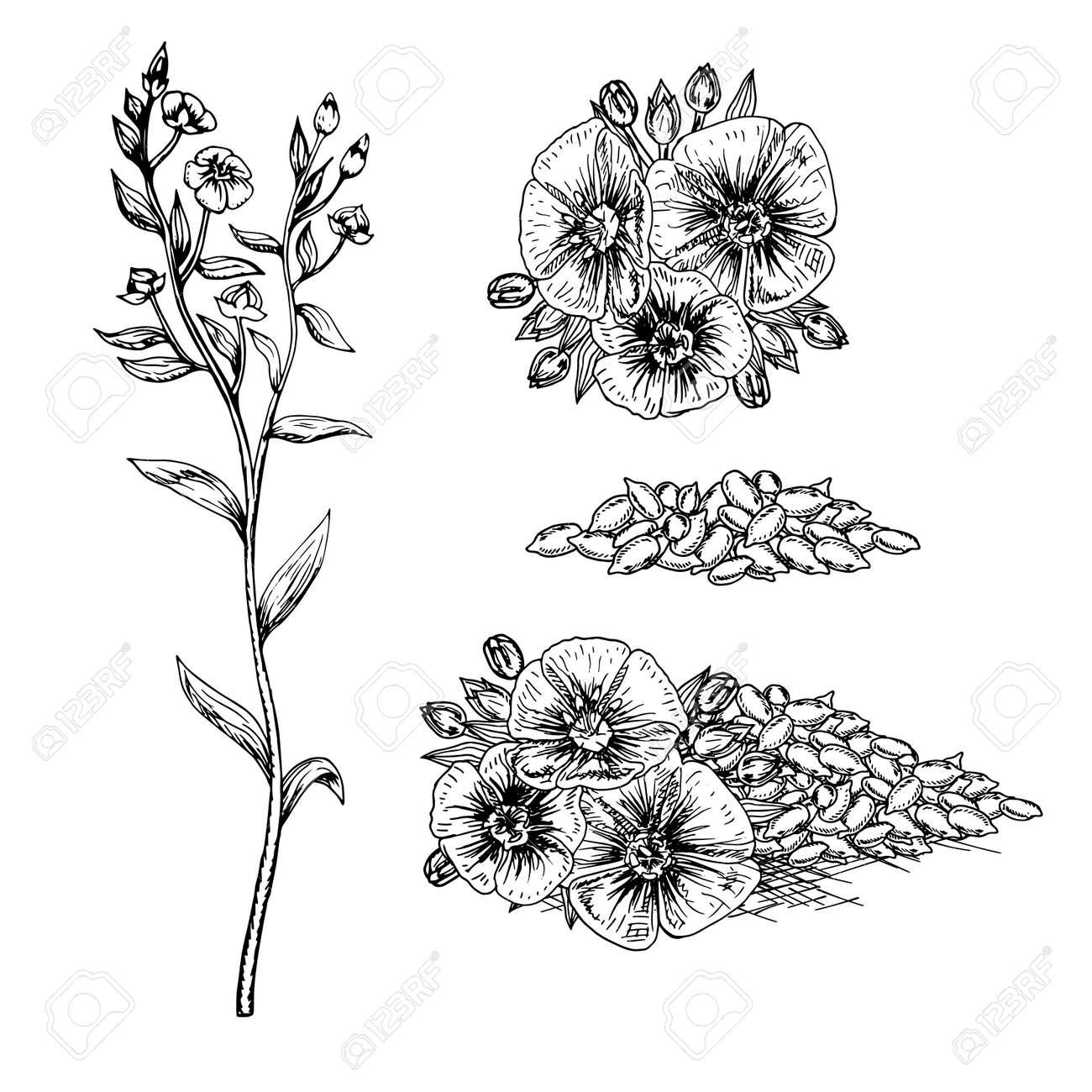 Hand Drawn Fleurs De Lin Et Les Graines Motif Dans Le Style Vintage Rétro Bouquet Noir Et Blanc Dessin Croquis De La Ligne Peut être Utilisé Dans