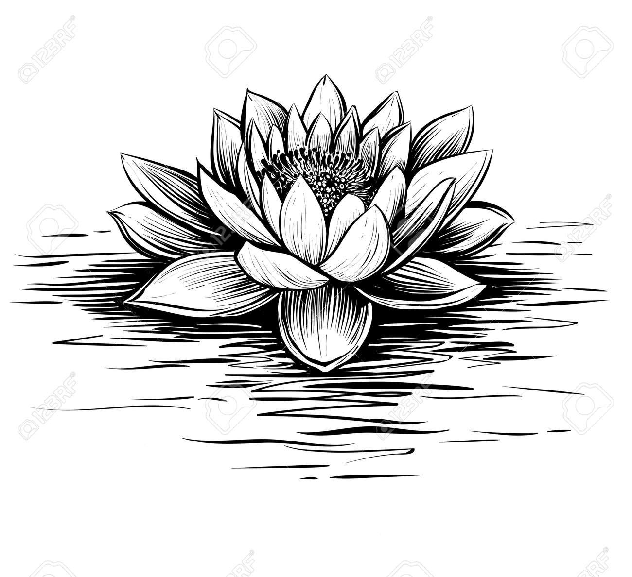 ベクトルの睡蓮蓮のイラストです黒と白のグラフィック アートのライン