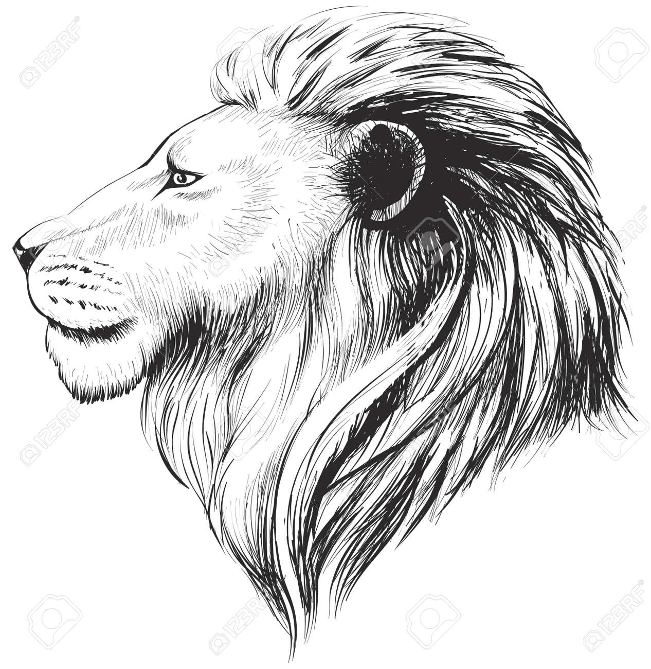 Isolated Lions Head Stylized Line Linear Art Vector Illustration