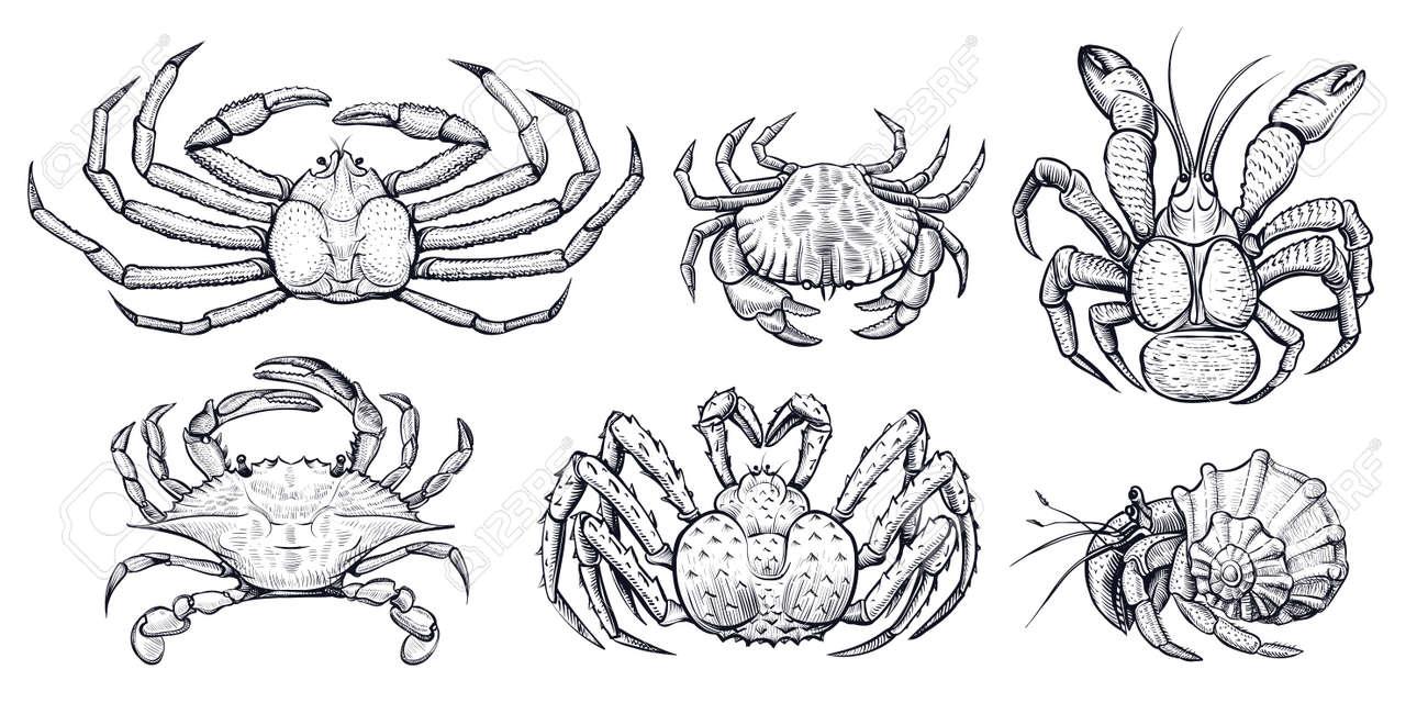 Dibujo Realista De Animales