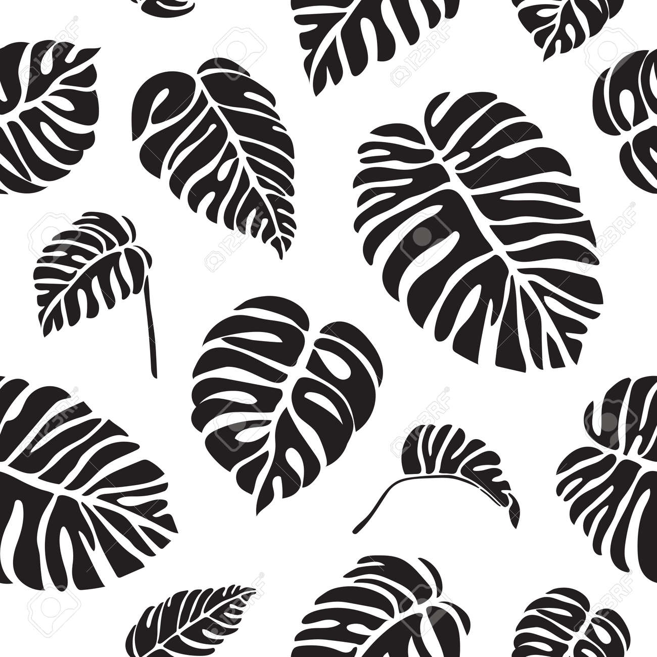 Monstera Black And White Seamless Pattern Tropical Leaves Vector Royalty Free Cliparts Vectors And Stock Illustration Image 104984017 Black and white jungle landscape silhouette animation loop. monstera black and white seamless pattern tropical leaves vector