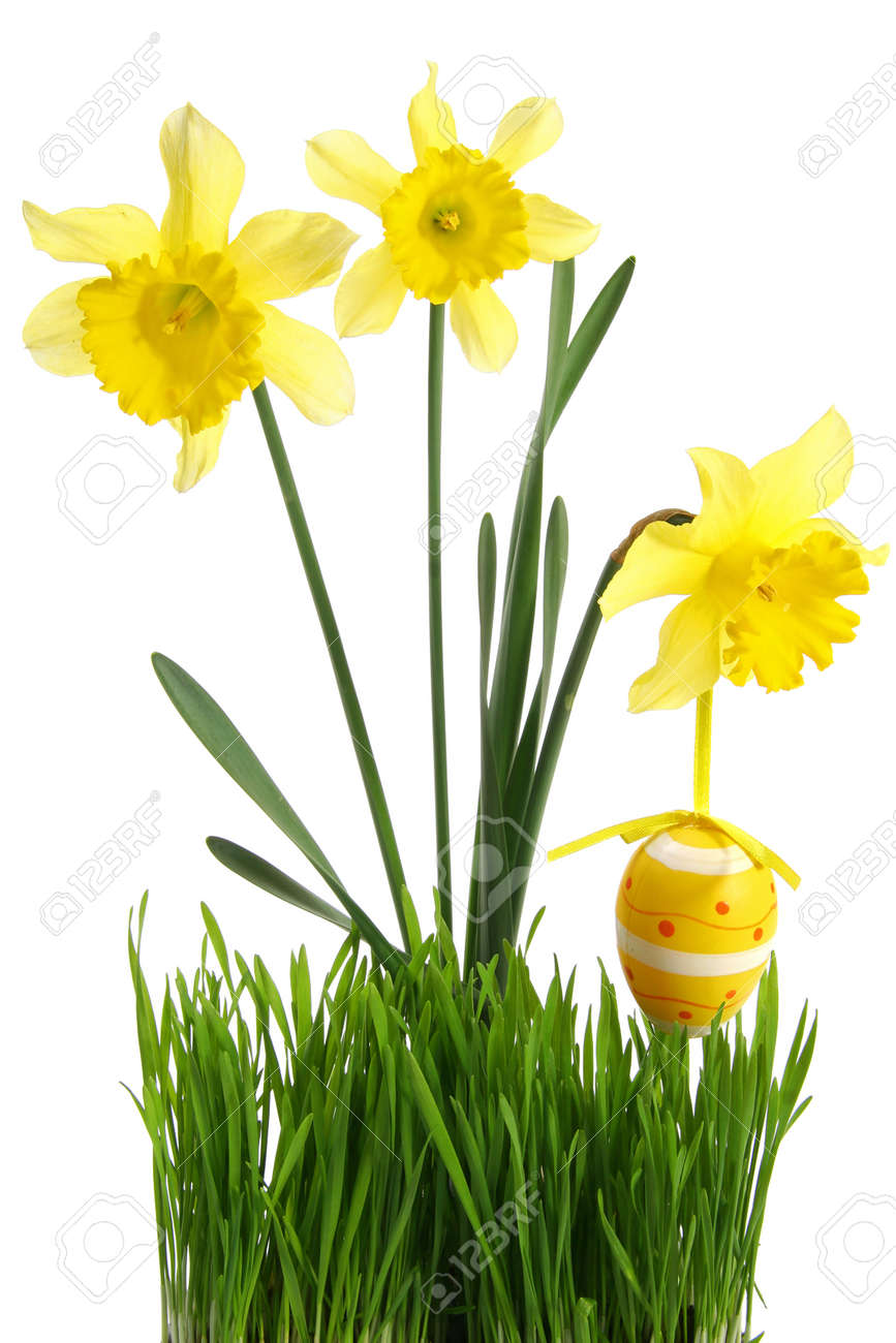 concept of spring season and french easter holidays: Green grass with bouquet of flowers and hanging Easter egg cut out and isolated on white background - 165941307