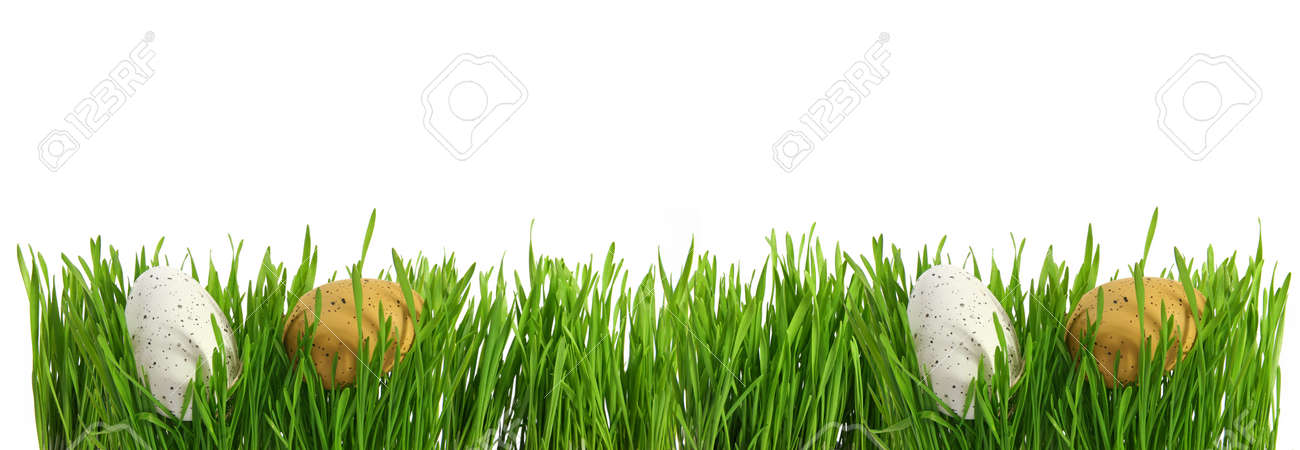 Large banner with easter eggs hidden in green grass, cut out isolated on white background for template design - 165941450