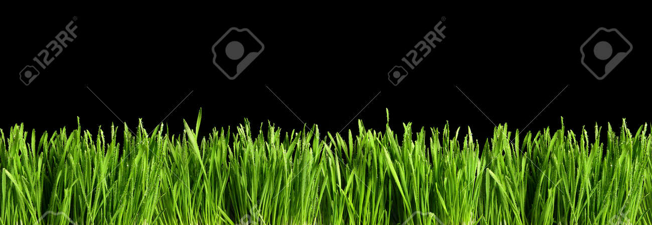 Large banner with green grass cut out and isolated on black background for template and banner design - 165941620