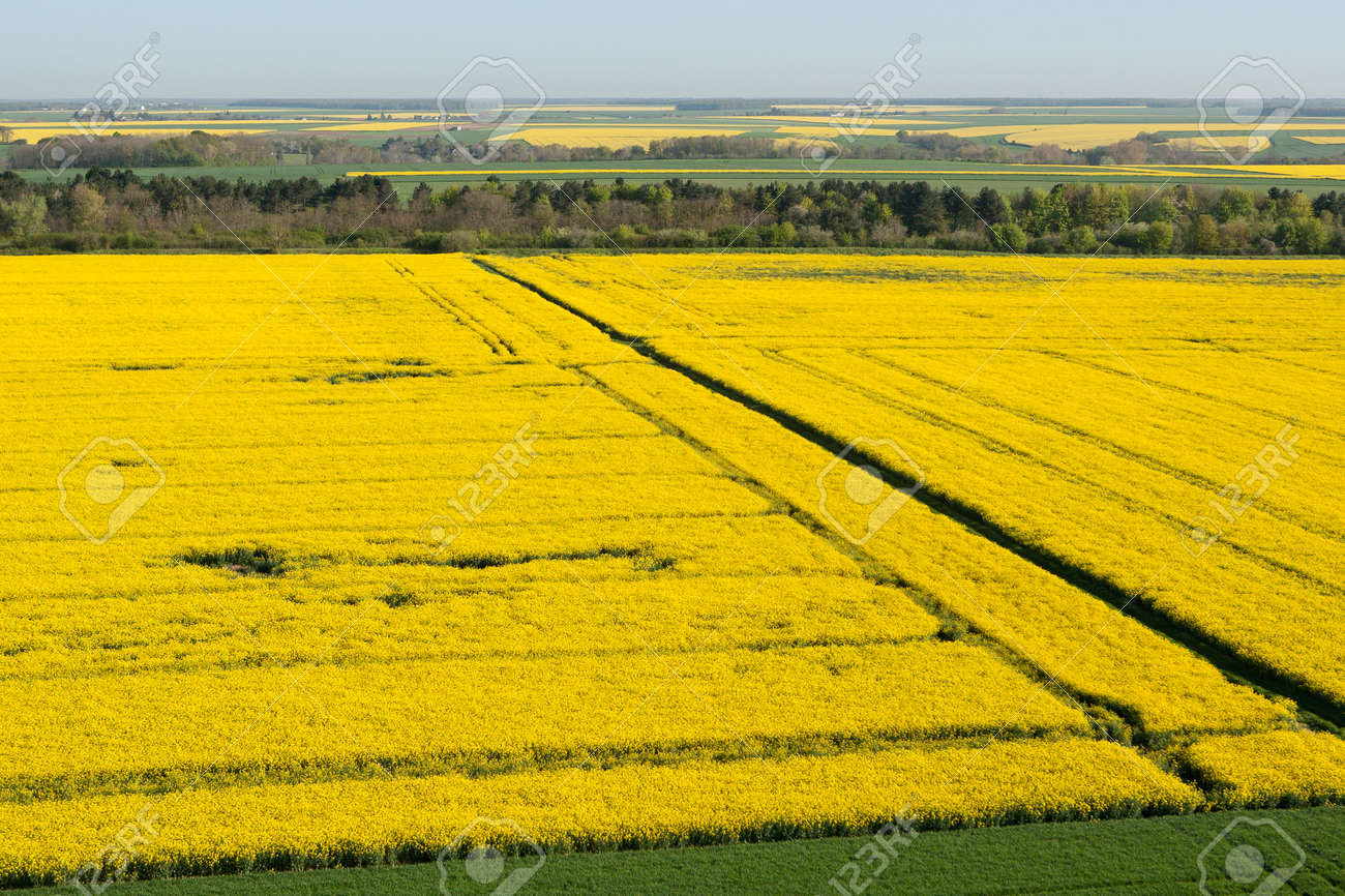 Aerial view of yellow colza fields in the Eure-et-Loir department in the Center-Val de Loire region, France. - 166832600