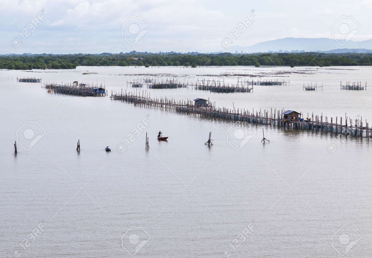Pisciculture Aquaculture Fish Farming In Chantaburi River Thailand ...