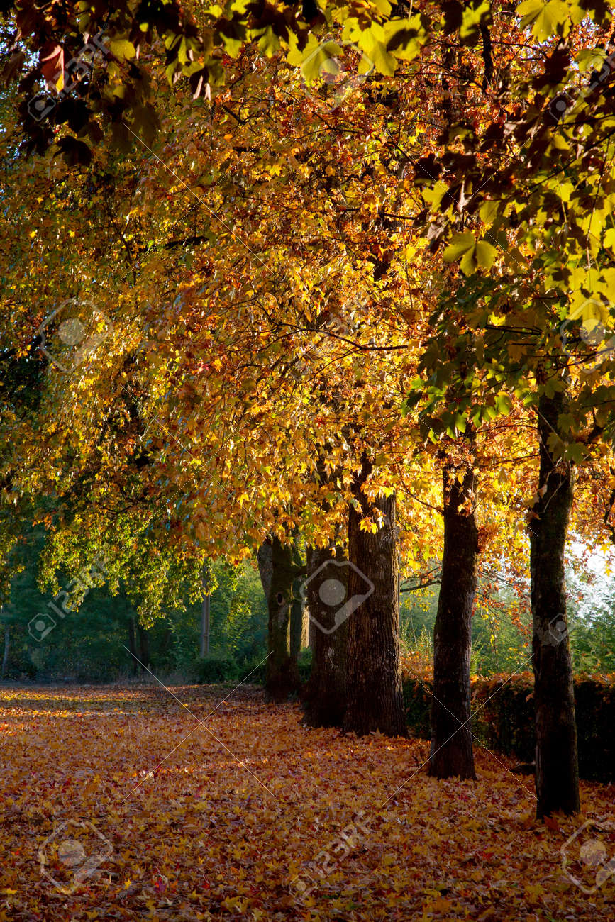 Trees in a park with fall colors. Stock Photo - 14408370