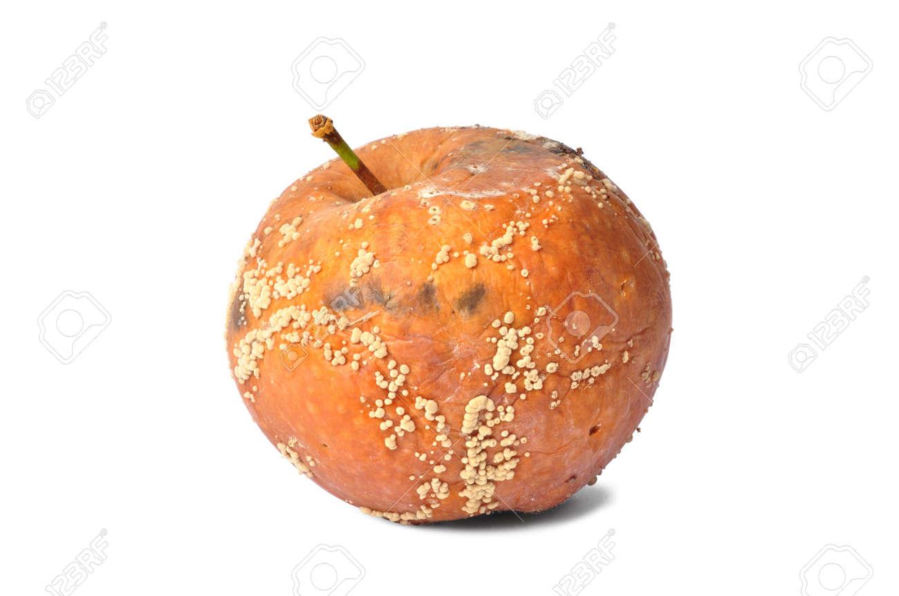 Macro of rotten apple isolated on white background Stock Photo - 14410672