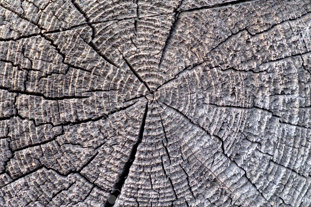 Nel paese la vecchia struttura ad albero nellilluminazione nuvolosa