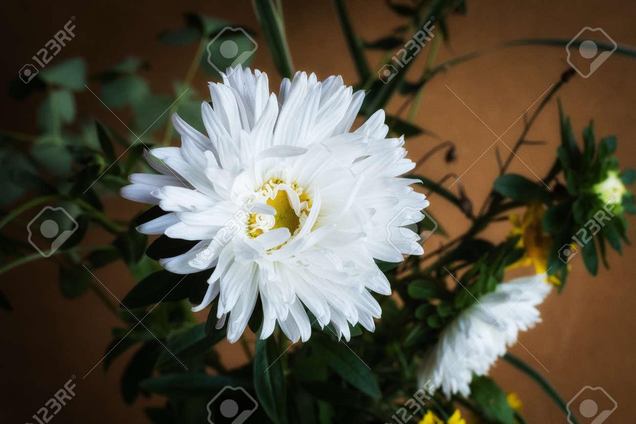 Banque d\u0027images , Fleurs jaunes oranges maman ou chrysanthèmes avec des  gouttes de pluie, fond de fleurs automne