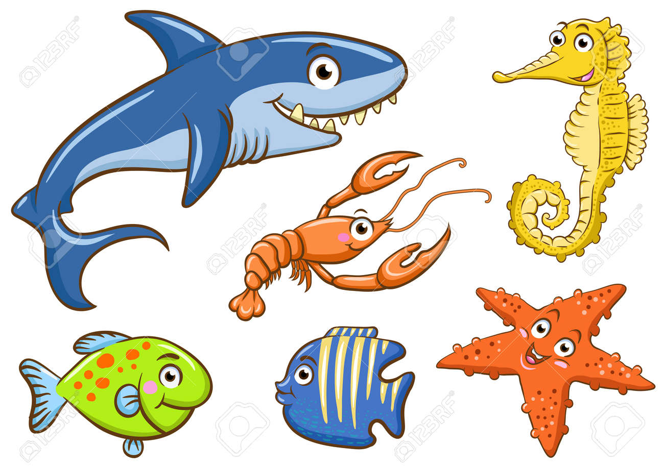 aquatic animals in the sea stock photo picture and royalty free