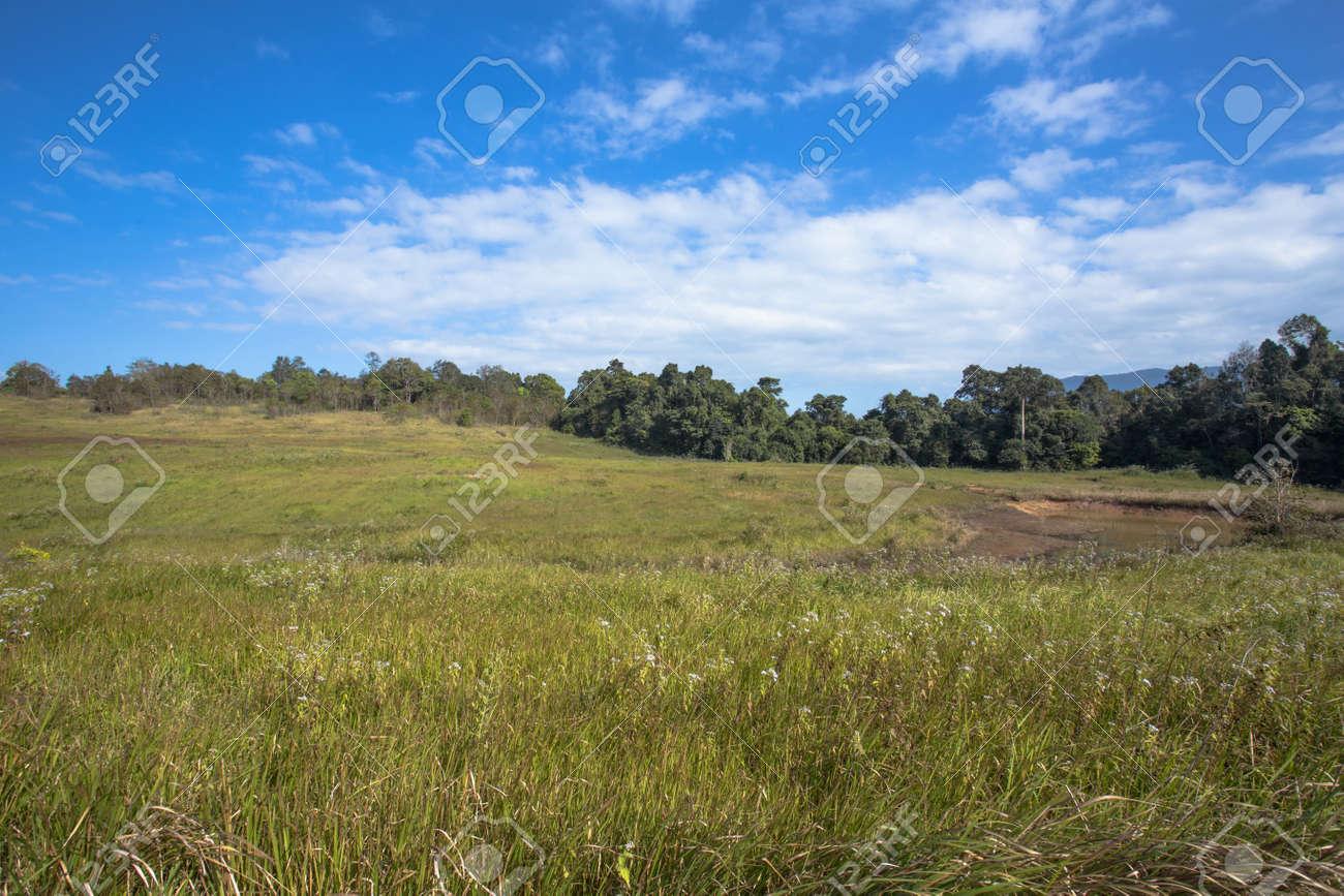 tall green grass field. Grass Land, Tall Green Landscape In Wide Field Stock Photo - 25602664