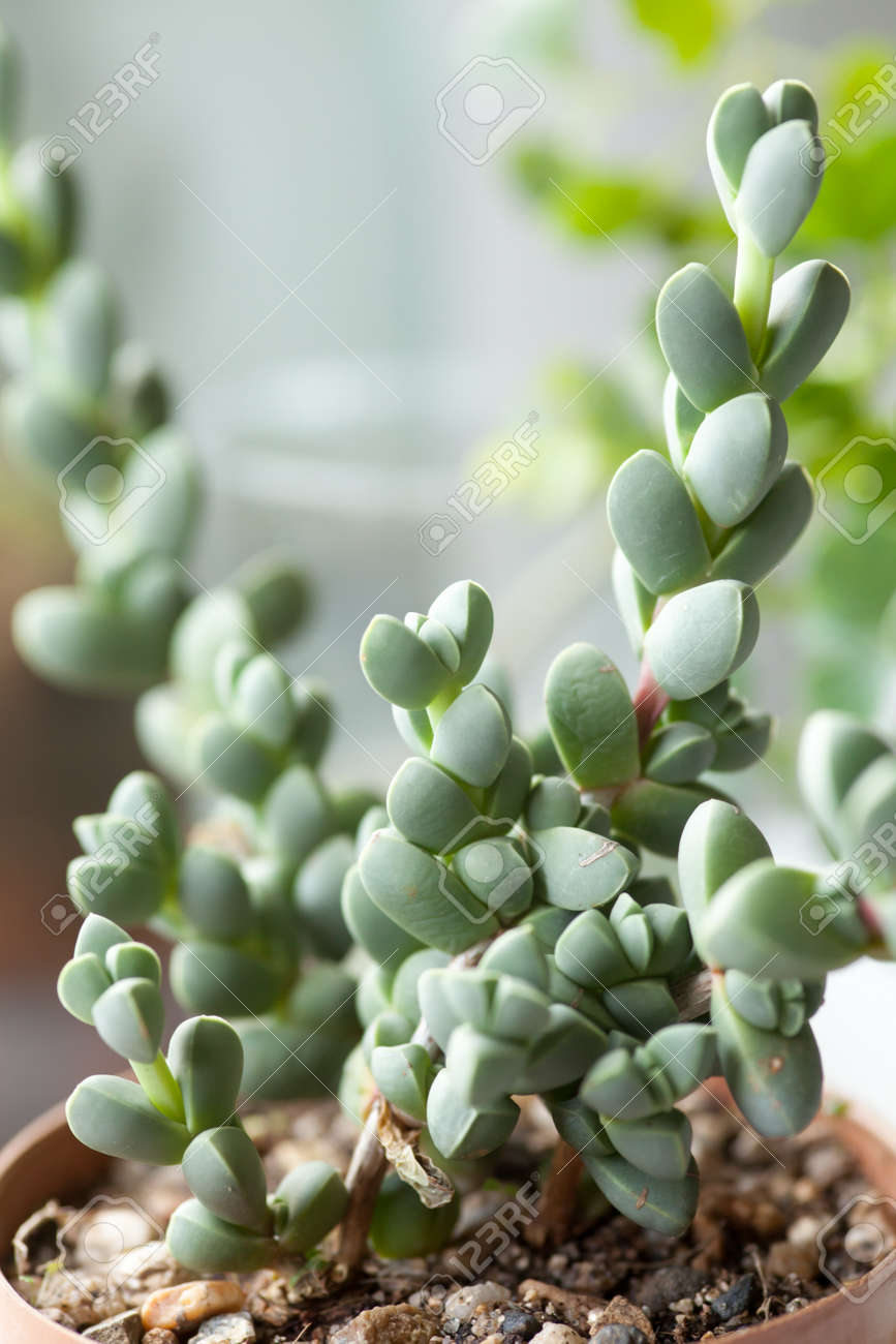Succulent Close Up Of Rare Succulent Plant Stock Photo Picture And Royalty Free Image Image 33415927