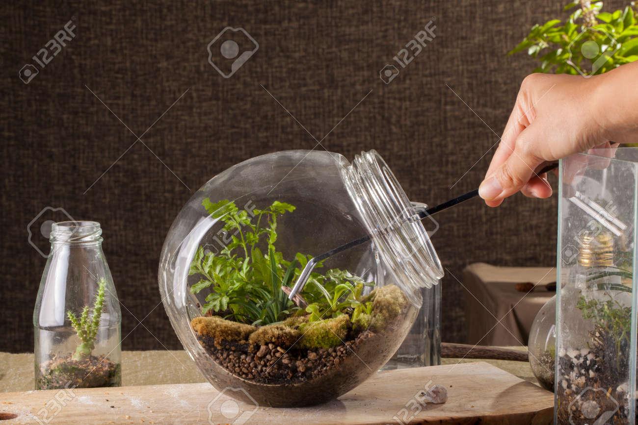 Terrarium, a hand with a tweezer making of bottle terrarium plant green  house. Stock - Terrarium, A Hand With A Tweezer Making Of Bottle Terrarium Plant