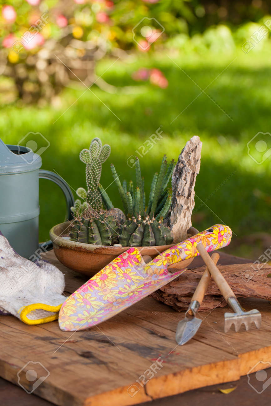 Superieur Mini Cactus Garden Put With Stone Arranged In Wide Pot Or Round Ceramic  Tray With Garden