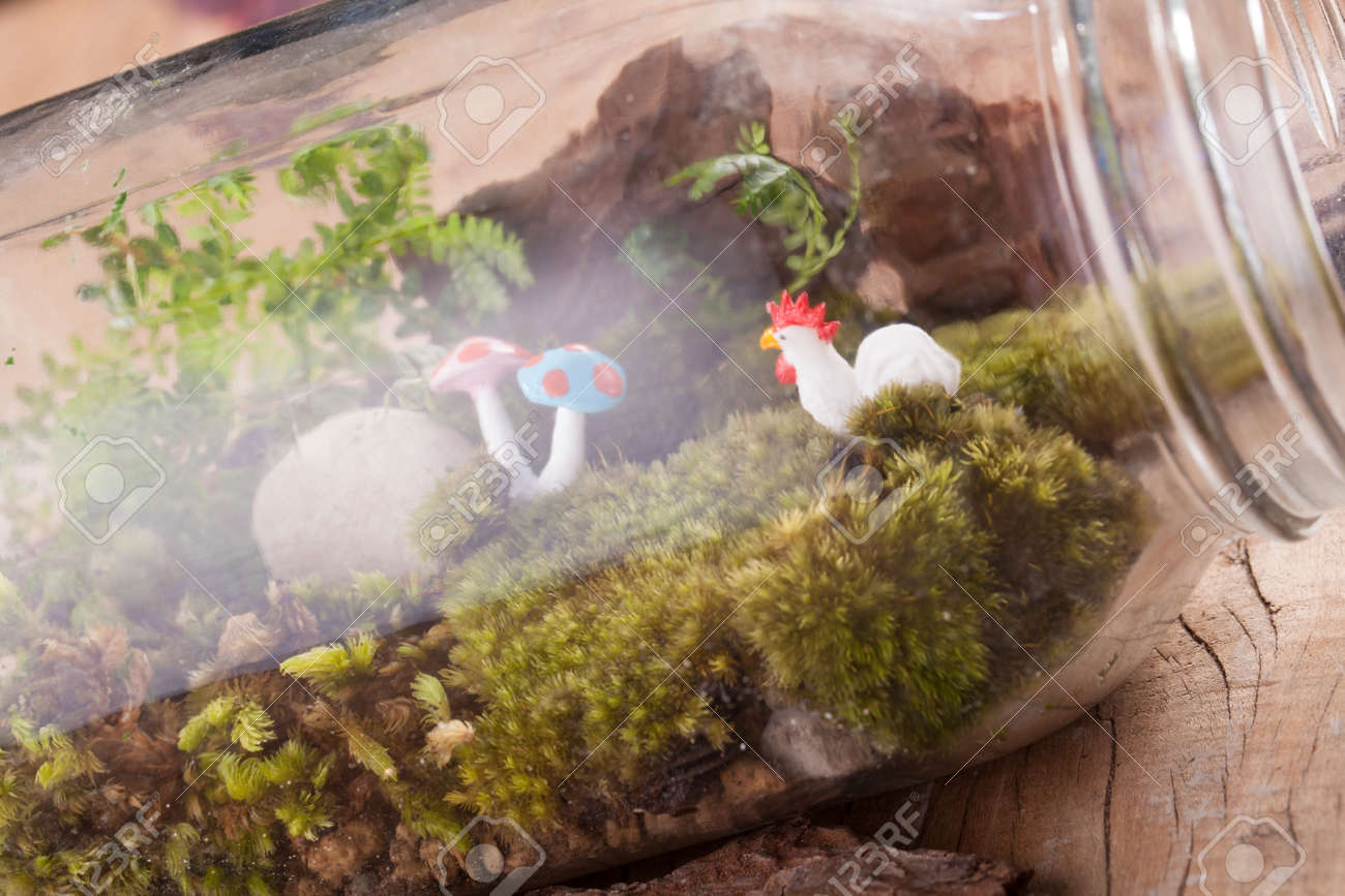 A Terrarium Garden Scene In A Clear Bottle With Moss Pebble Stock Photo Picture And Royalty Free Image Image 66001441