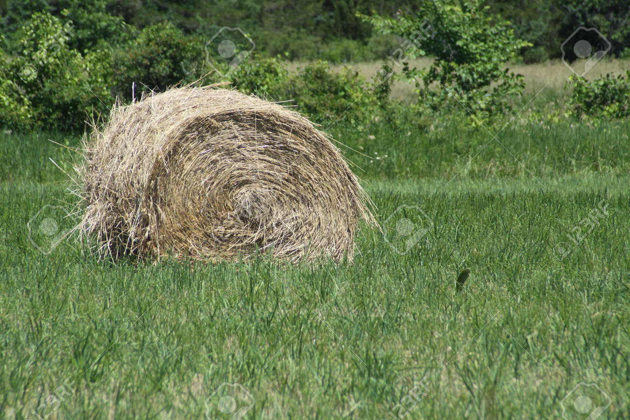 Freshly cut and baled round hay bales in a small farmers field Stock Photo - 15605638