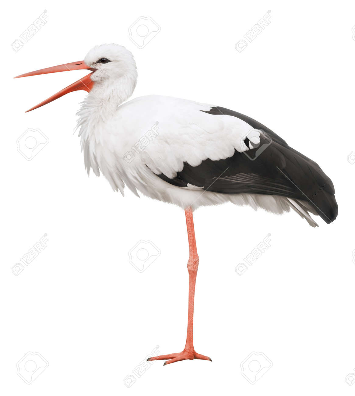 Stork on his long legs and an open beak  Symbol of pregnancy Standard-Bild - 18440776
