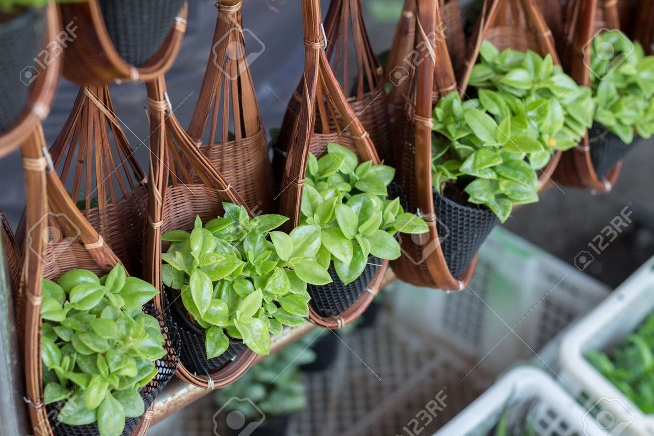 Little plant hanging in the flower pot for garden decoration stock little plant hanging in the flower pot for garden decoration stock photo 67339820 workwithnaturefo