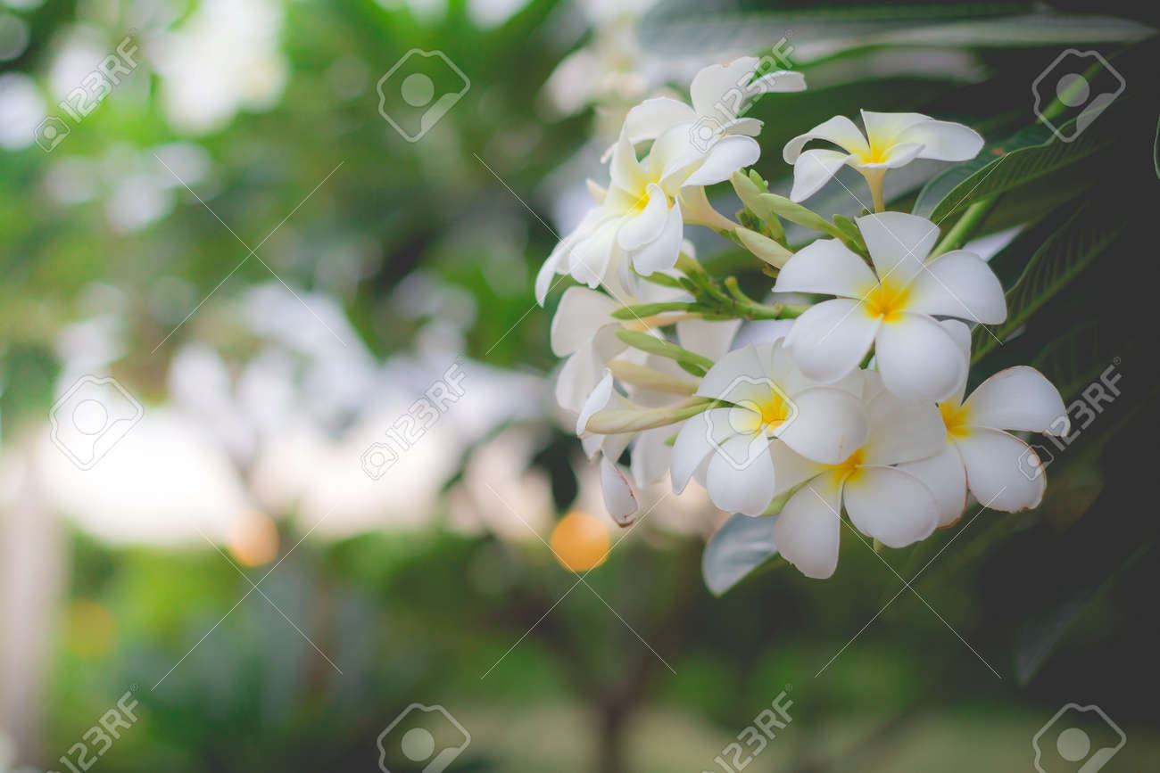 Strong sweet smelling white flower choice image flower decoration strong sweet smelling white flower images flower decoration ideas funky strong sweet smelling white flower picture mightylinksfo