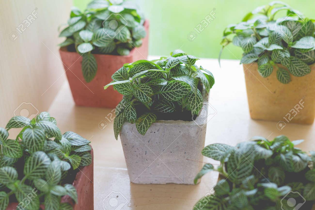 Decoration Petit Pot De Fleur petite plante dans un petit pot de fleurs pour la décoration de jardin