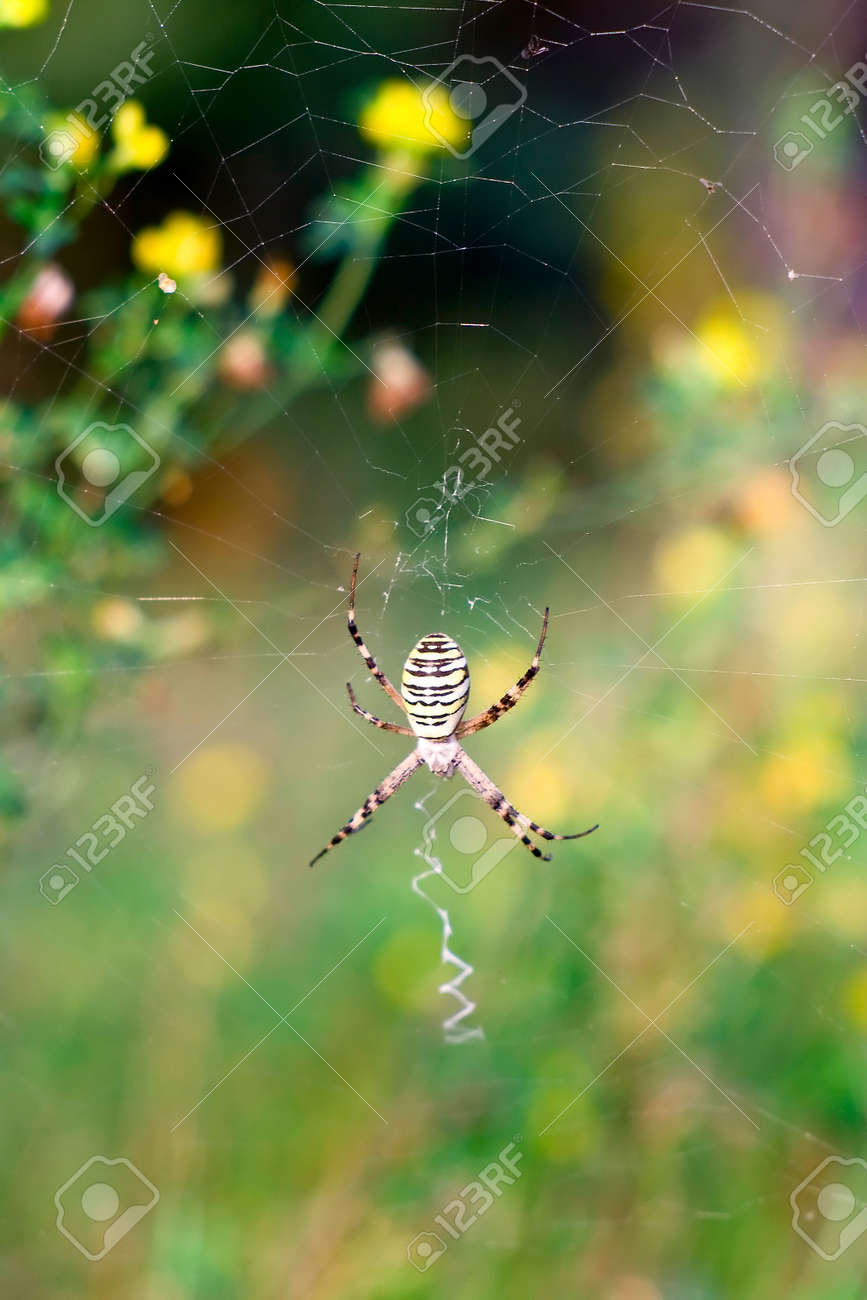 Spider on the web over green background Stock Photo - 14197502