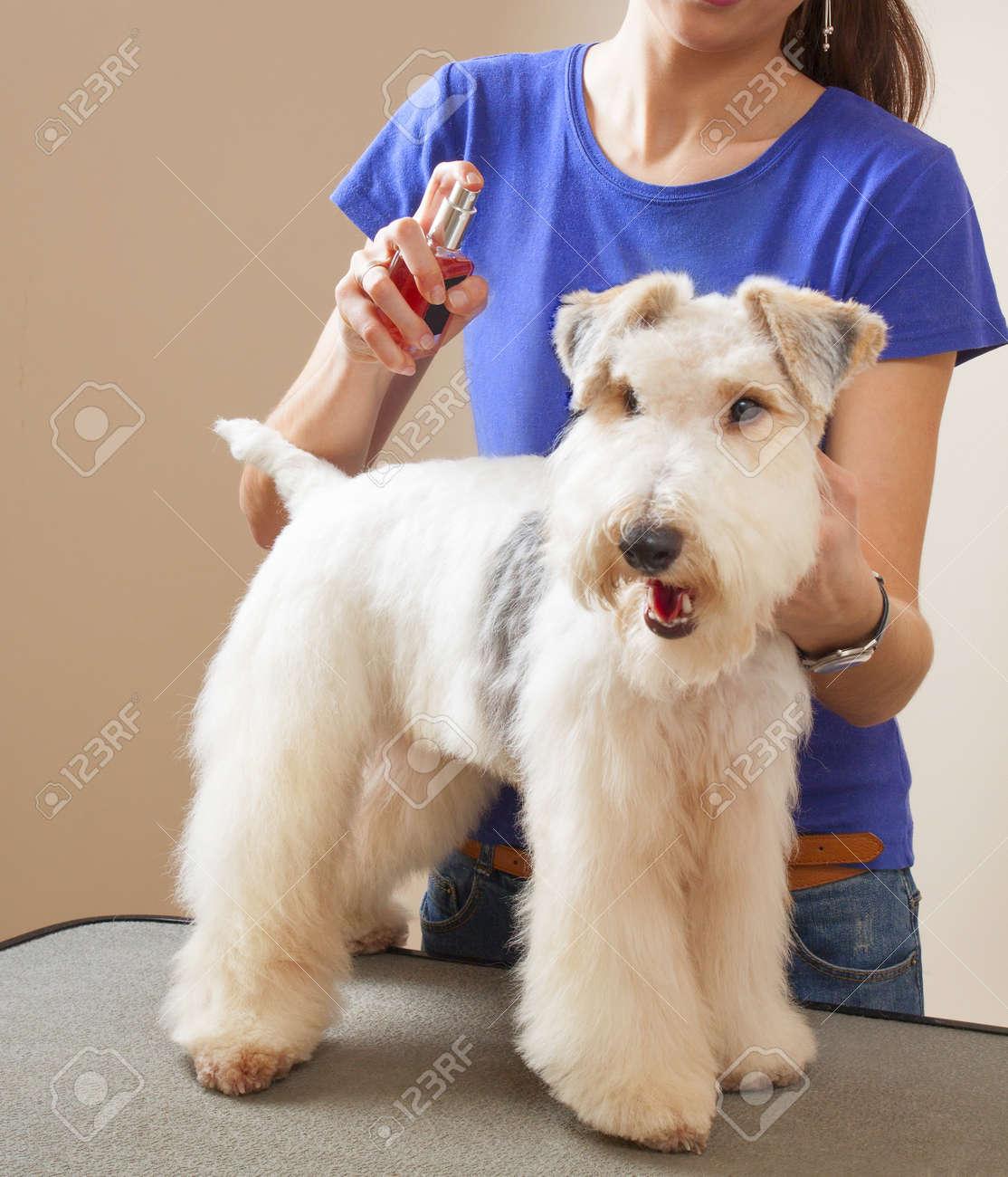 Corte de pelo de fox terrier