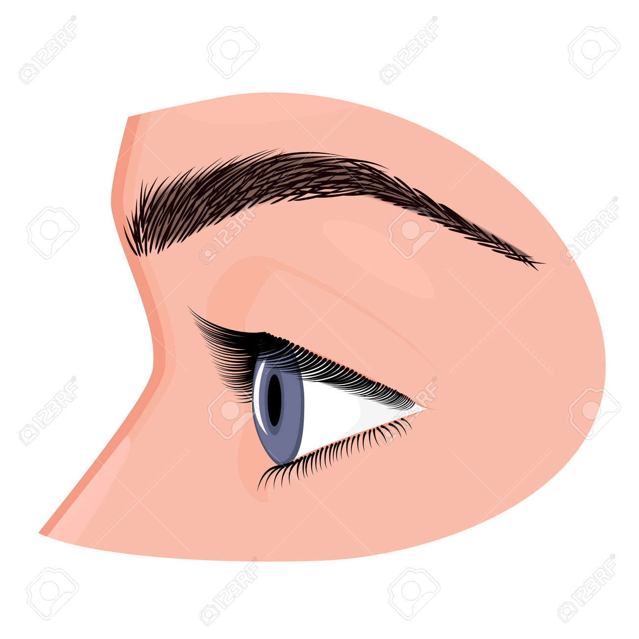 Vector Illustration Anatomy Of A Human Eye Side View Close Up