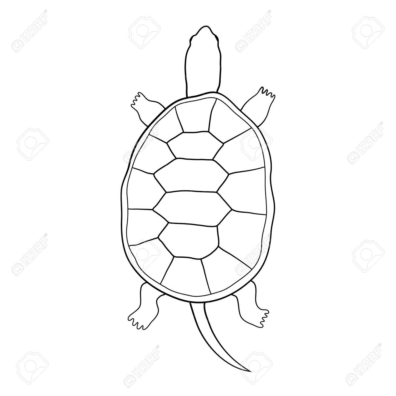 Hand Gezeichnet Schildkröte Illustration Im Cartoon-Stil. Die Kontur ...