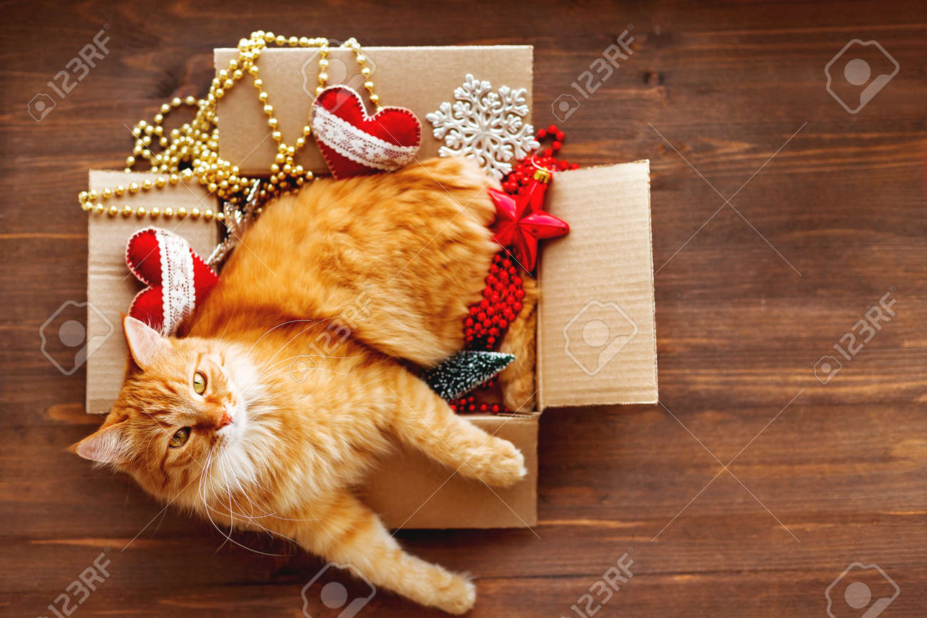 Ginger cat lies in box with Christmas and New Year decorations on wooden background. Fluffy pet is doing to sleep there. - 91579912