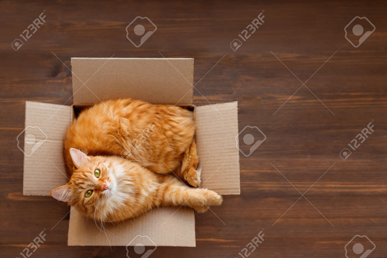 Cute ginger cat lies in carton box on wooden background. Fluffy pet with green eyes is staring in camera. Top view, flat lay. - 122366605