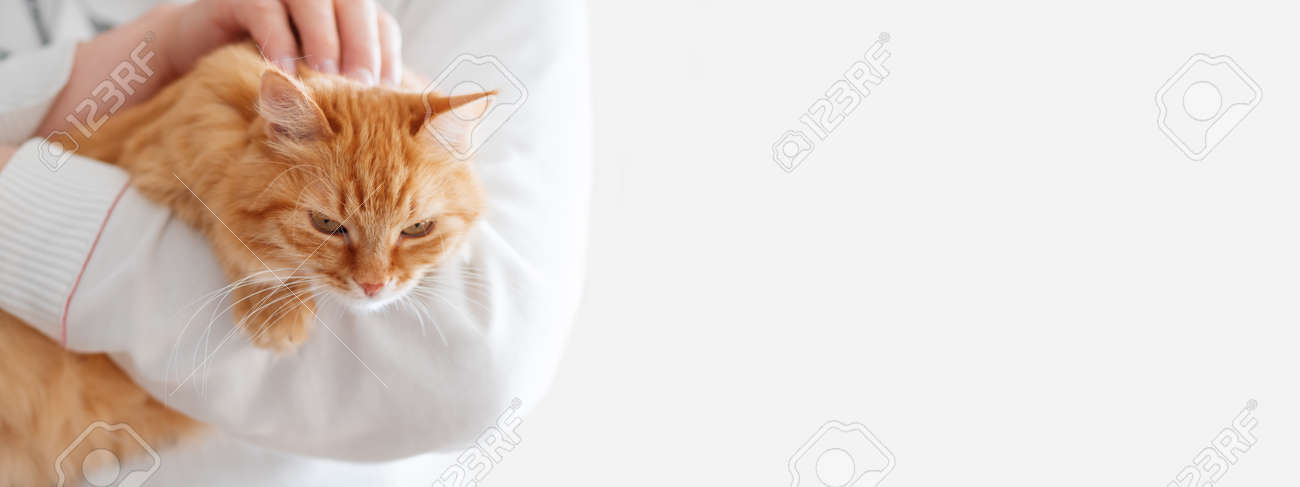Cute ginger cat is sitting on man's hands and staring at camera. Symbol of fluffy pet adoption. Copy space. - 123154543