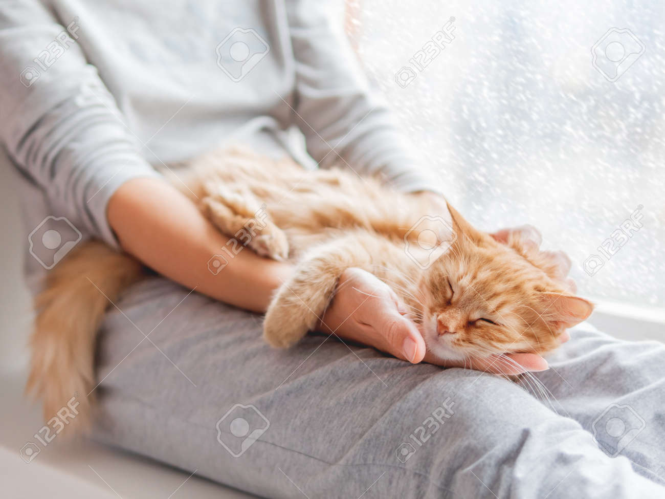 Cute ginger cat lying on woman's knees. Woman in gray pajama strokes fluffy pet. Cozy morning at home while snow is falling outside. - 151929764