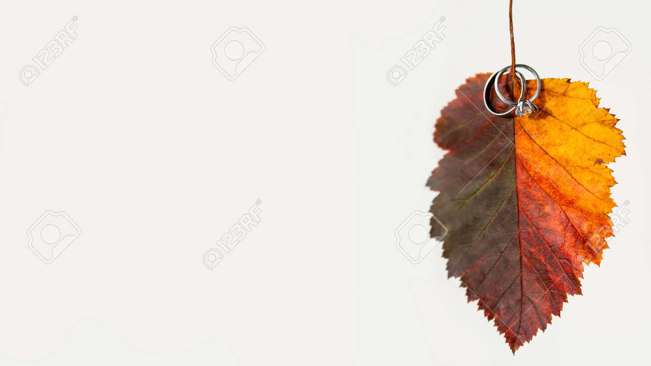 Bright red fallen leaf with pair of wedding rings. Engagement ring with diamond on colorful autumn leaf. White background with light and shadow. - 172806577