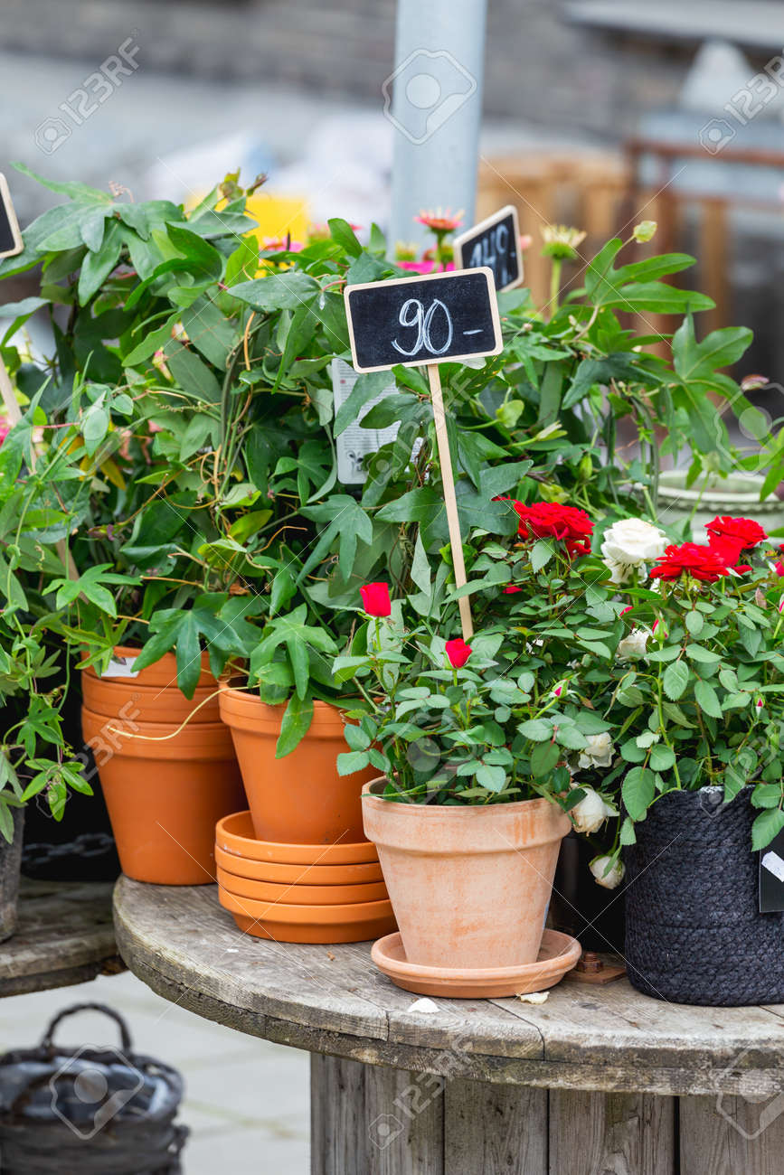 Outdoor shelf with blooming plants in clay pots. Sale of shrubs and houseplants in flower shop. Red roses with chalk price tag at open air market. - 172806634