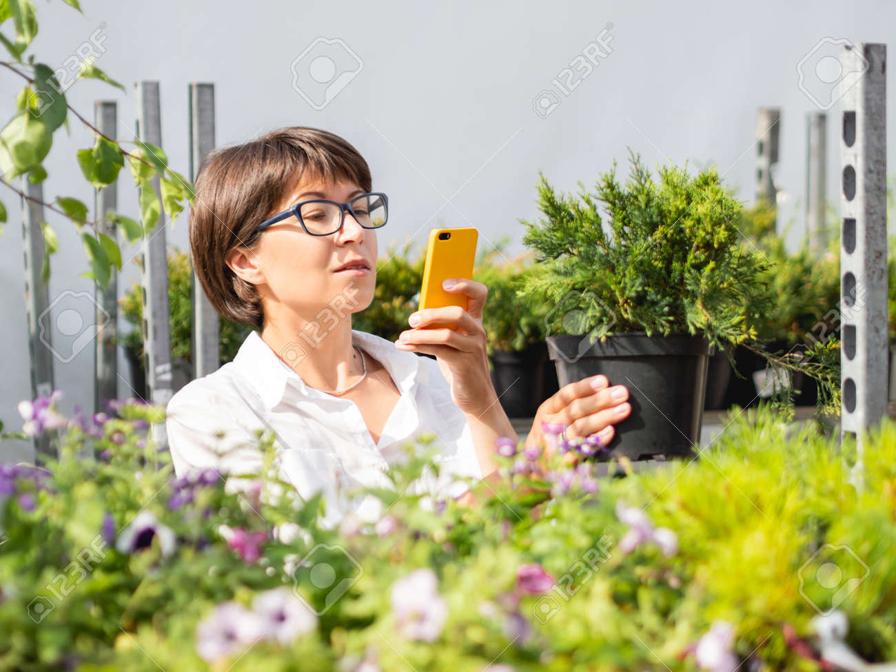 Woman chooses plants for landscaping and takes pictures of tree seedlings. Outdoor shelves with seedlings, flowering plants and seeds in flower shop. Open air agronomic market. - 172806606