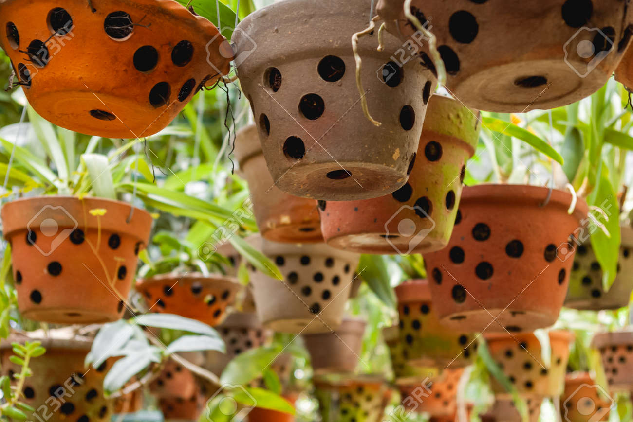 Greenhouse with hanging clay pots. Special flower pots with holes for aerial roots of tropical plants and orchids. - 172806609