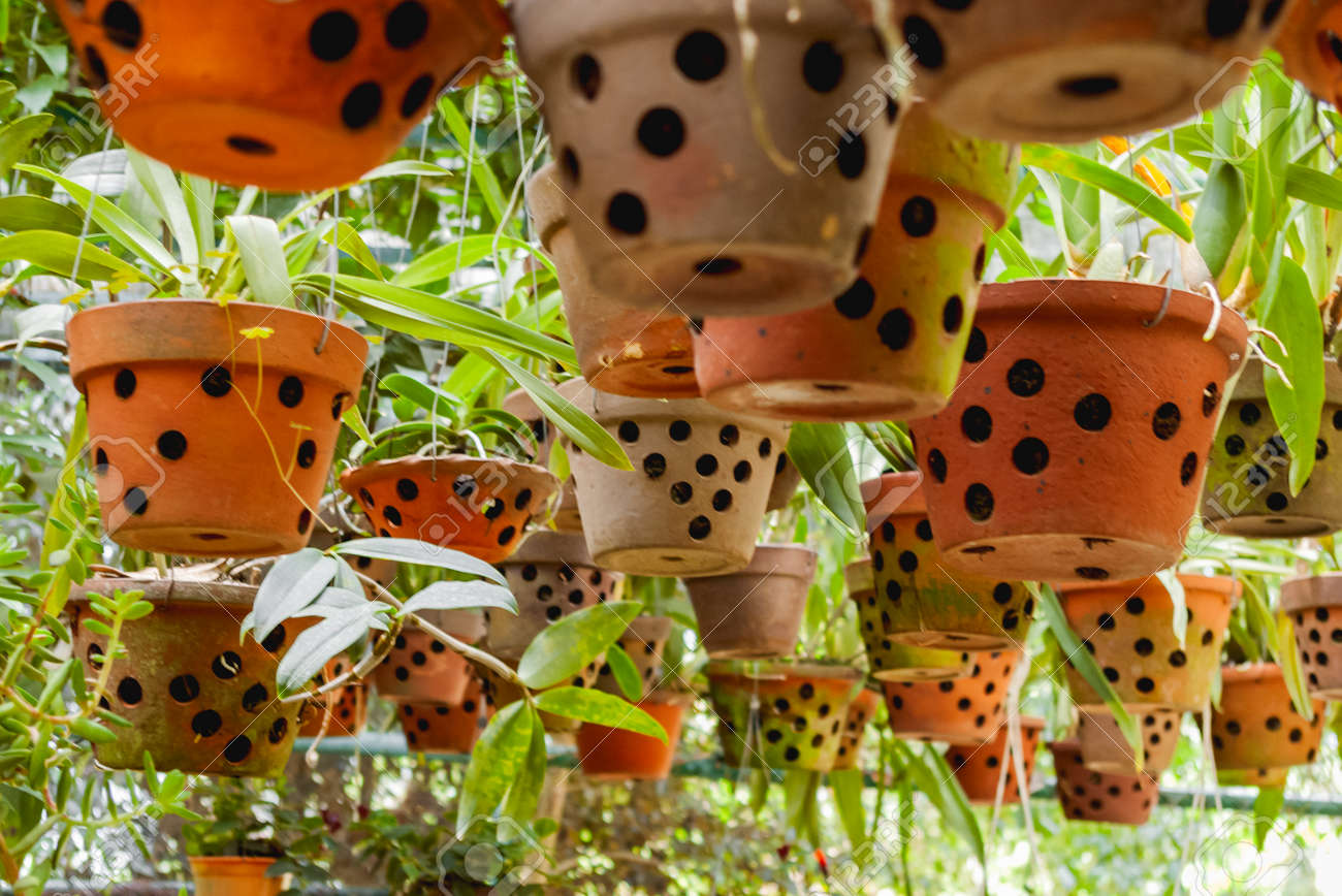 Greenhouse with hanging clay pots. Special flower pots with holes for aerial roots of tropical plants and orchids. - 172806617
