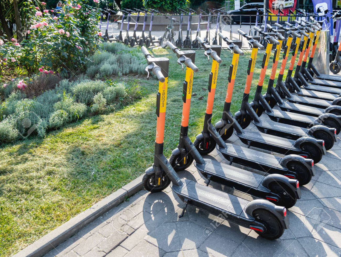 SOCHI, RUSSIA - May 27, 2021. Kick scooters for rent in urban park. Eco-friendly and comfortable urban transport for tourists and locals. - 172810786