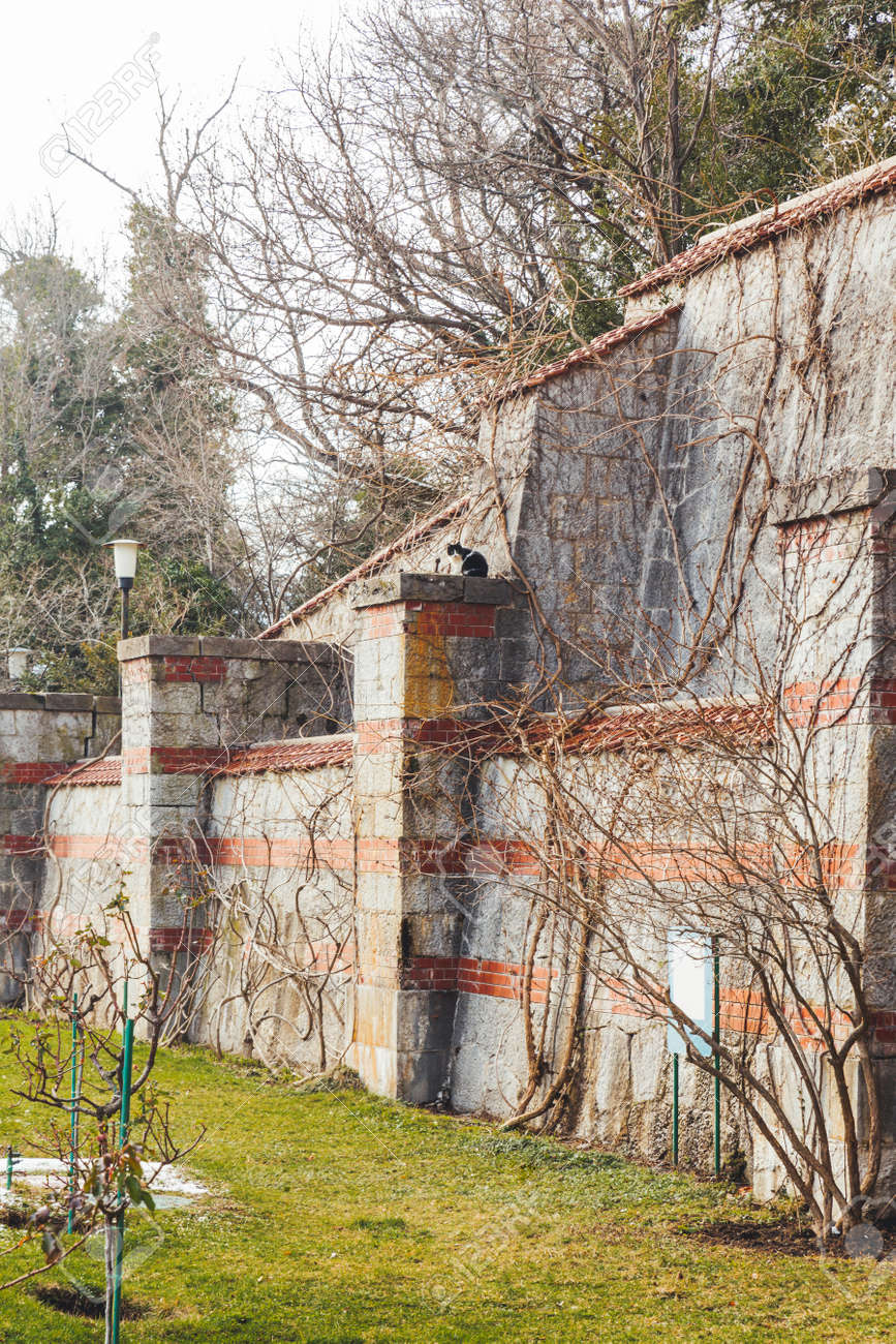 MASSANDRA, CRIMEA - February 10, 2015. Stray cat sits on stone fence at grounds of Massandra Palace. Chateauesque villa of Emperor Alexander III of Russia. - 173362707