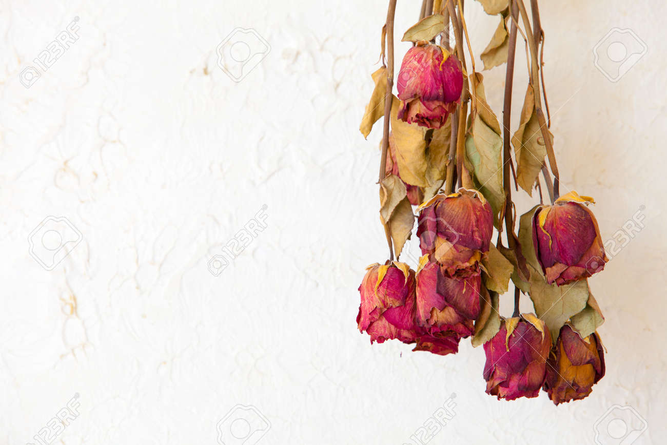 Memory Of Love Dried Red Roses Flowers Frame Blank Copy Space ...