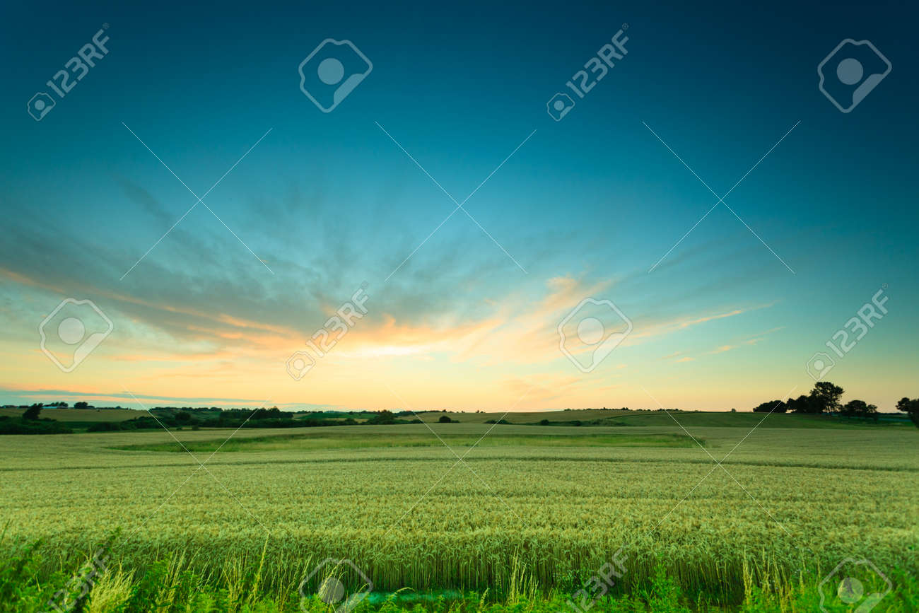 Evening landscape. Beautiful sunset or sunrise over green summer field meadow with dramatic red sky, Stock Photo - 43171550