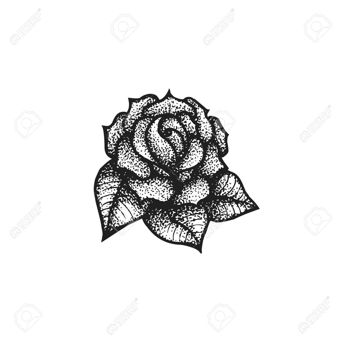 Vector vector black work tattoo dot art hand drawn engraving style vintage rose flower illustration isolated white background