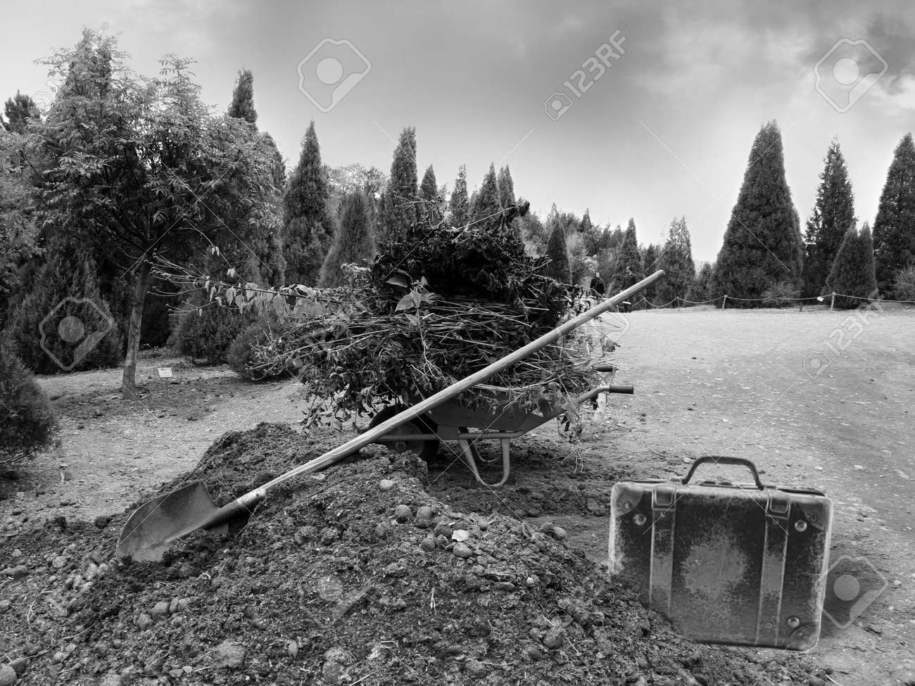 Wheelbarrow with garden waste on the land at a park with shovel