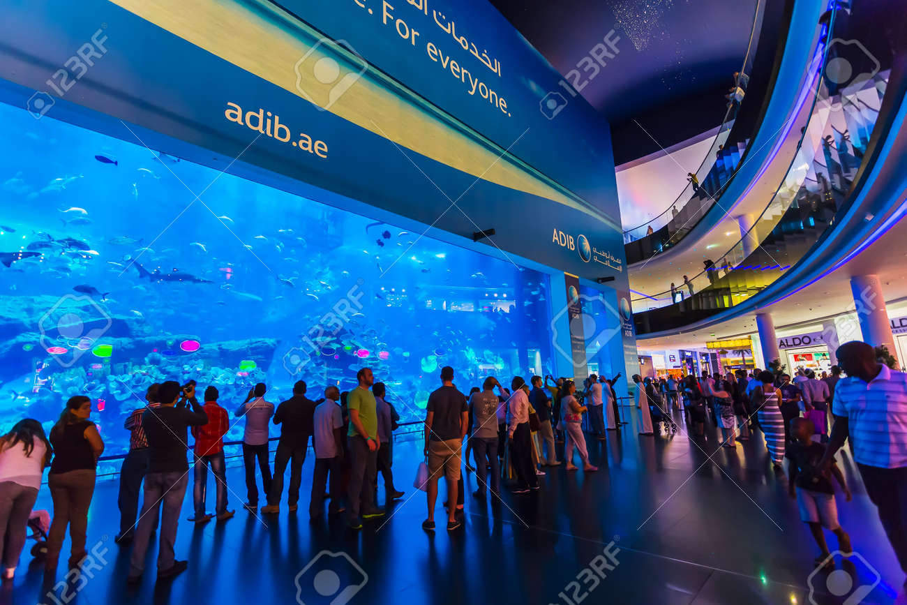 Fish aquarium in uae - Dubai Uae Nov 9 Aquarium In Dubai Mall World S Largest Shopping Mall