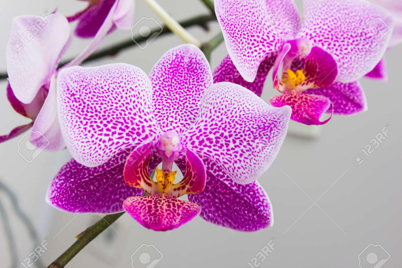 Blumen Orchideen In Einem Gewachshaus Fur Die Dekoration Lizenzfreie
