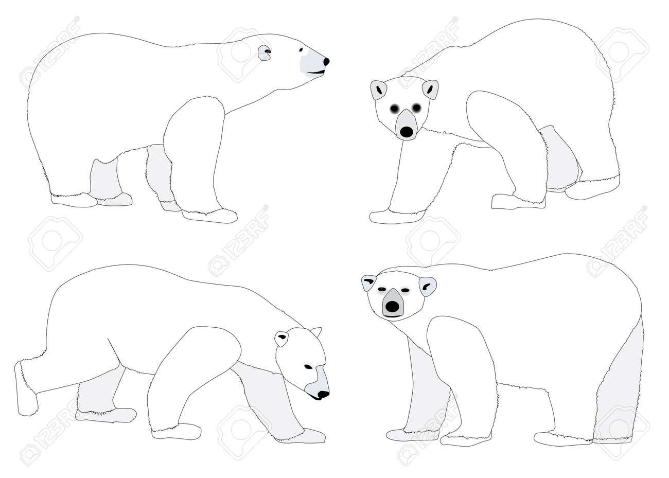 A collection of four polar bear sketches Stock Vector - 17144654