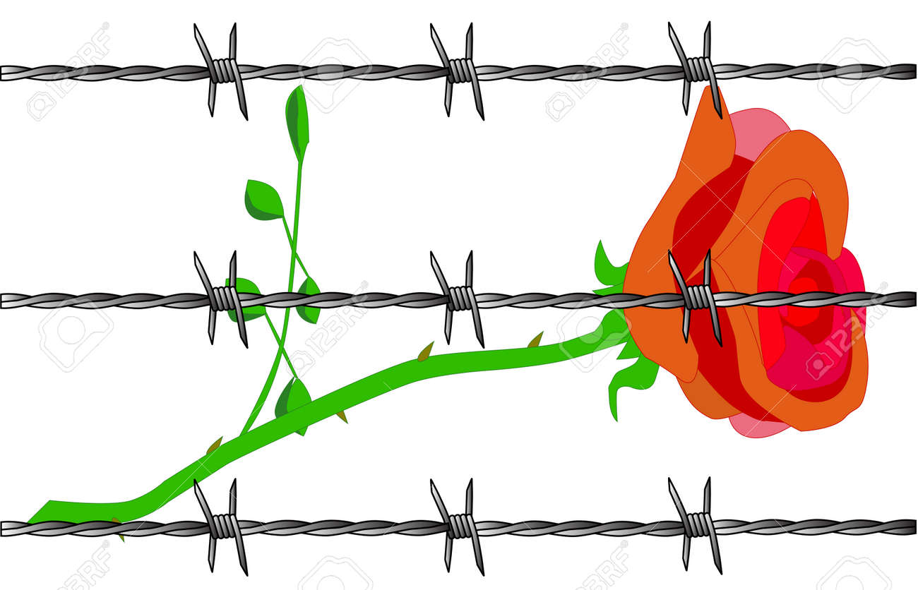 A Cartoon Rose With Barbed Wire Set On A White Background Royalty ...